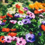 花にはなぜ色があるの?