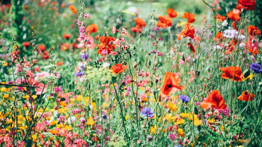花のように生きる〈生きる意味は何かという問い〉