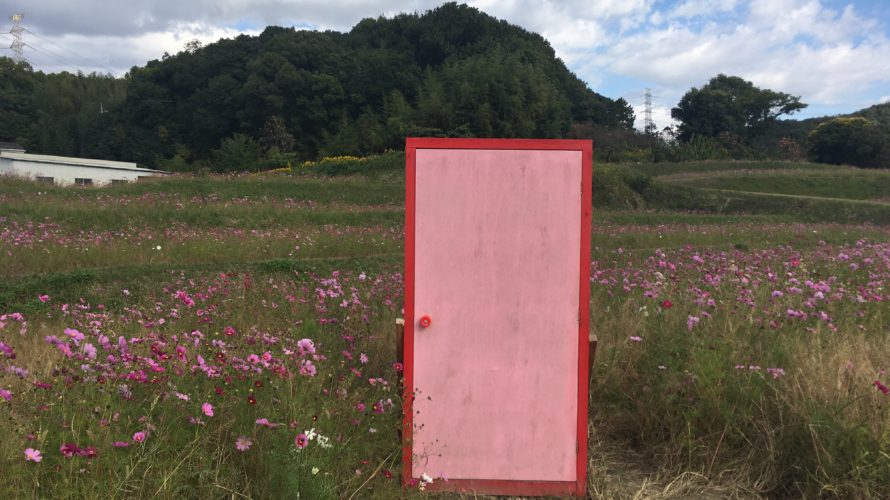 【ウェディングシーズン】コスモス畑に行ってきました【ピークを乗り越えました】